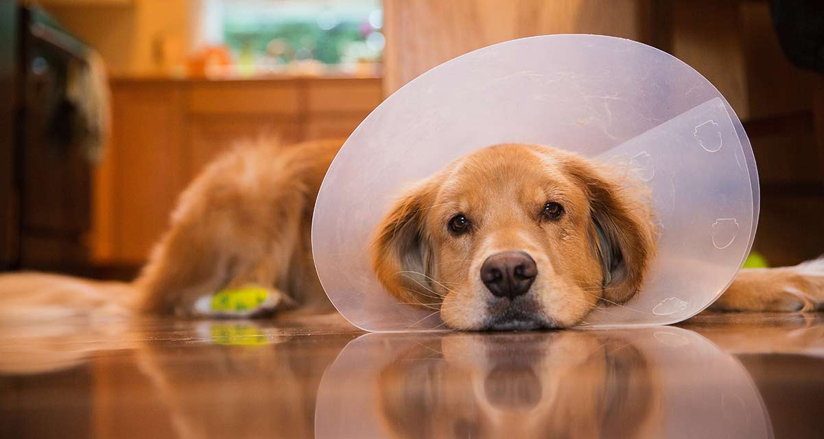 The Best Cone Of Shame Alternatives