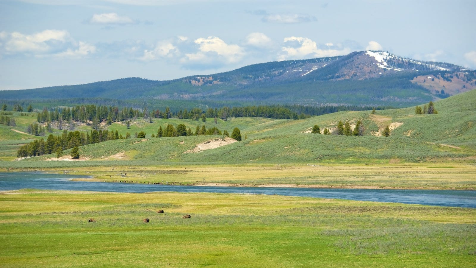 Best Things to Do at Yellowstone National Park  Foreign