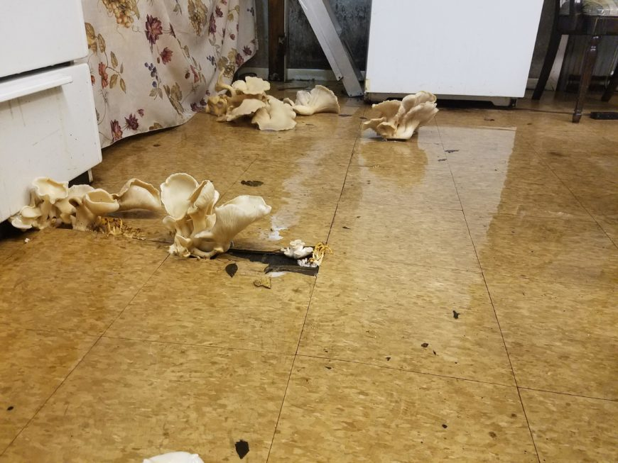 Mushrooms Growing In Bathroom Foreign Policy